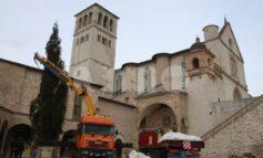 Albero e presepe di San Francesco, domani 8 dicembre l'accensione