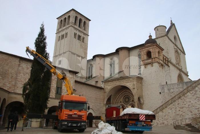 Albero e presepe di San Francesco, domani accensione e convegno su salvaguardia creato