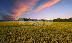 Gestione del rischio in agricoltura, se ne parla ad Assisi