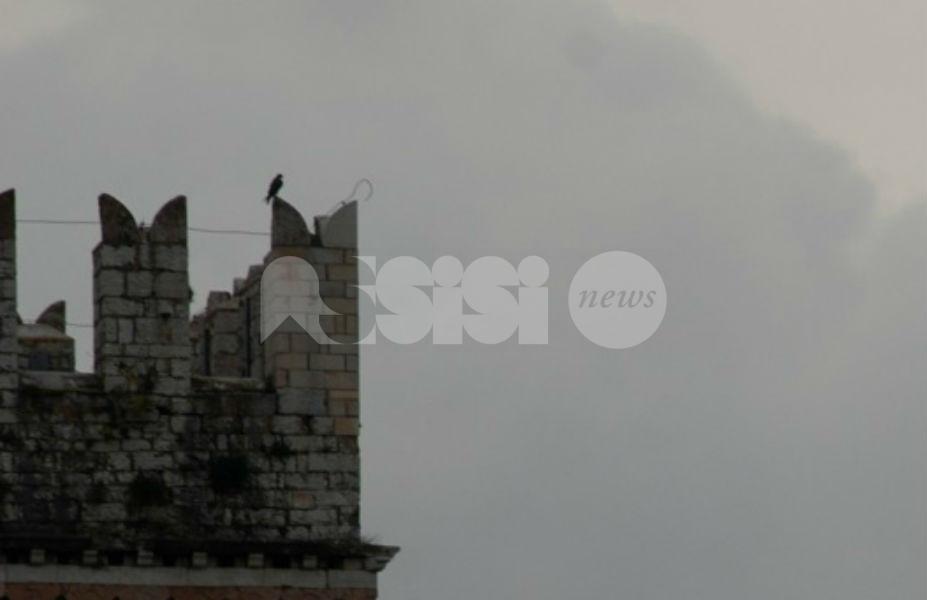 """Falconi ad Assisi, arriva una """"cassetta"""" per aiutarli a nidificare"""