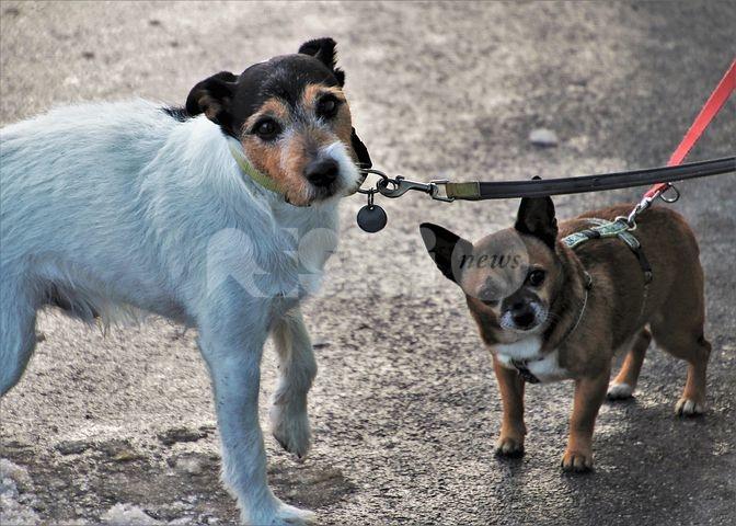 Troppe deiezioni canine in giro, protestano i residenti di via Cristofani