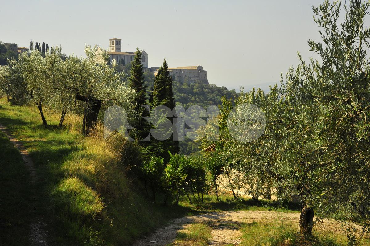 #ItaliaMiManchi, il Fai racconta il Bosco di San Francesco (video)