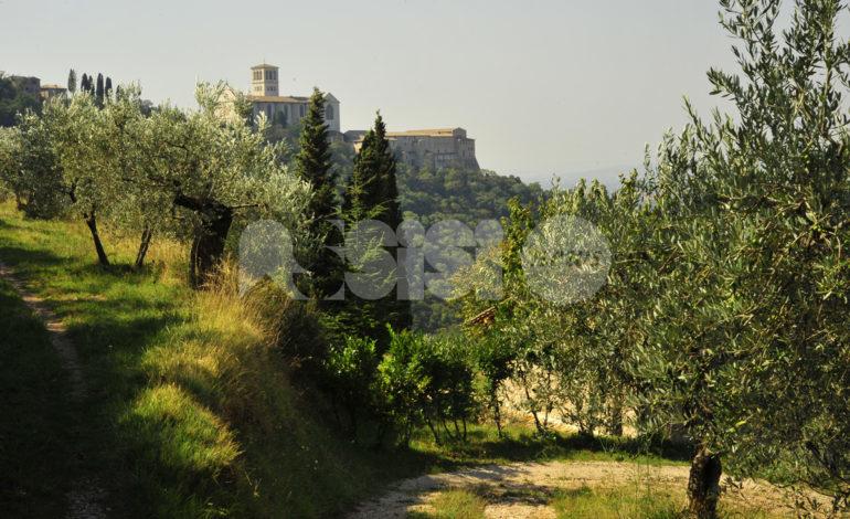 Bosco di San Francesco, da oggi riapertura in sicurezza per il bene FAI