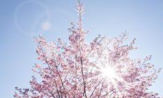 Meteo Assisi 22-24 maggio 2020: sole e caldo gradevole nel weekend