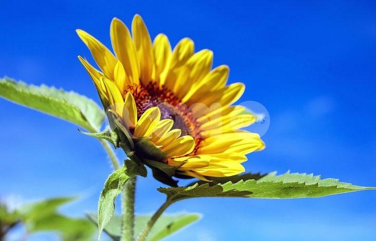 Meteo Assisi 10-12 luglio 2020: venerdì e sabato molto caldi, domenica 'fresca'