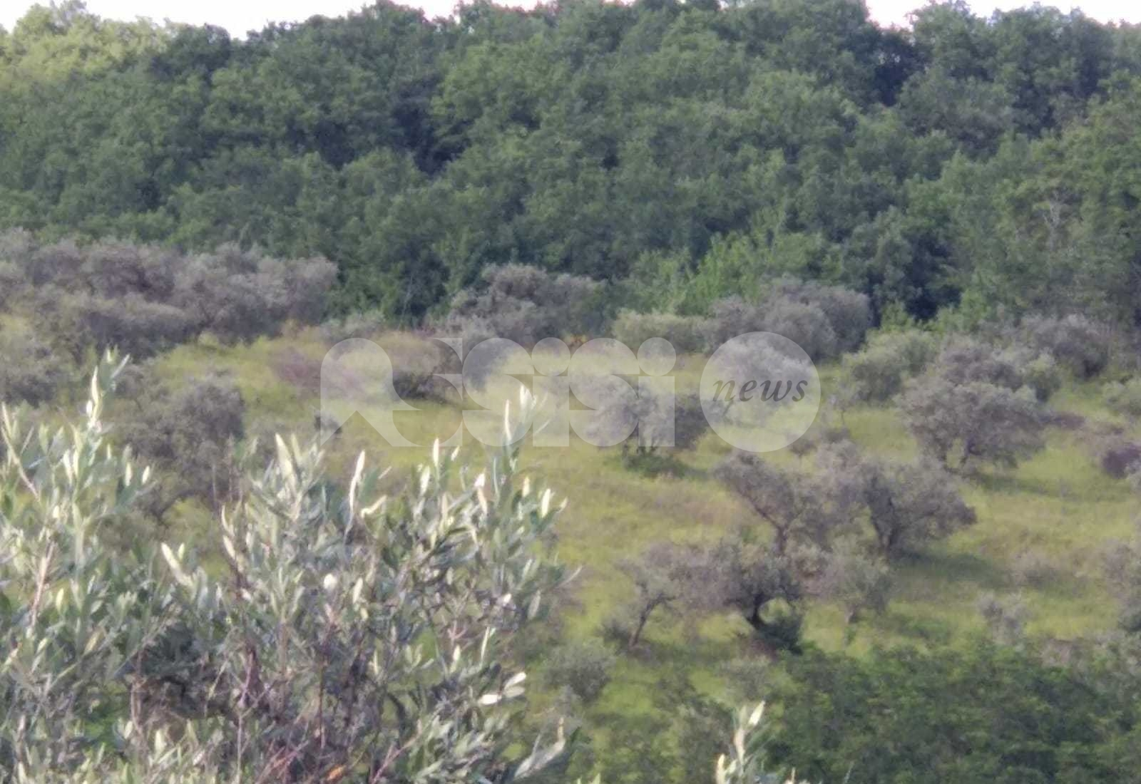 Zona di caccia a San Gregorio, le precisazioni della Società Agricola Tarisha Srl