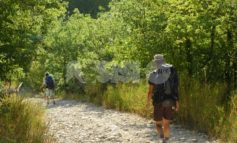 Selvatica 2020 domenica 20 al Bosco di San Francesco: il programma