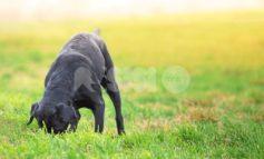 Whisky non ce l'ha fatta: un altro cane avvelenato a Paradiso di Assisi