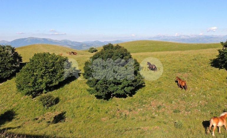 Auto rovinate dagli animali sul Monte Subasio, il chiarimento dei gestori