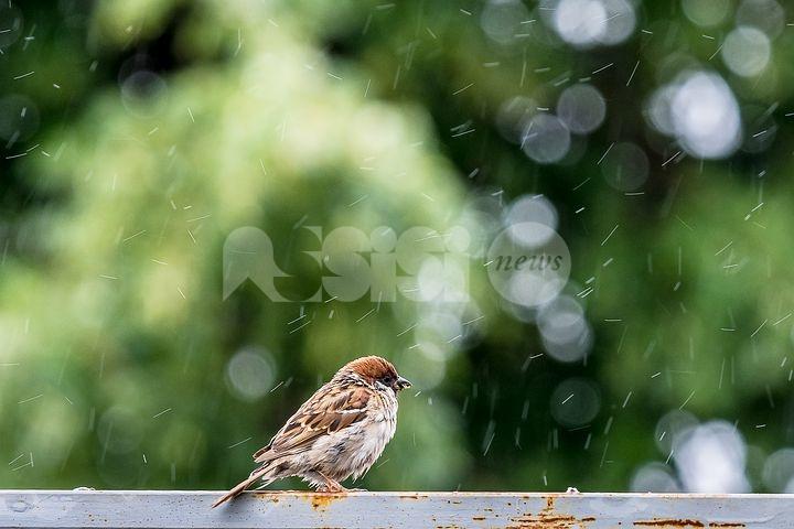 """Meteo Assisi 12-14 marzo 2021: pioggia e sole nel weekend, temperature """"altalenanti"""""""
