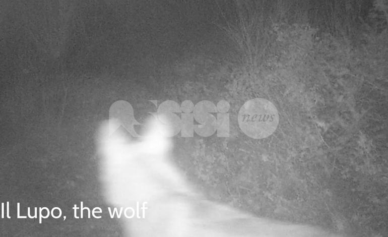 Le meraviglie del bosco raccontate da una famiglia di Assisi (video)