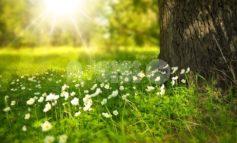Meteo Assisi 26-28 marzo 2021: weekend fra sole e nubi, da lunedì piena primavera