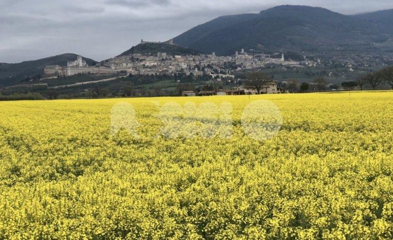Earth Day 2021, Giornata Mondiale della terra: aderisce il Comune di Assisi