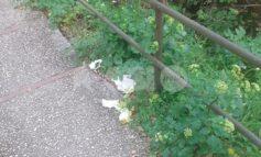 Viale Umberto I, ancora incuria e rifiuti alle porte di Assisi (foto)