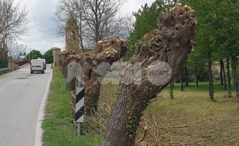 Potature selvagge: alberi 'capitozzati' a Petrignano d'Assisi