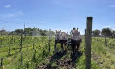 """Cavalli collaboratori, la lettera di un lettore: """"Folle che da Assisi parta un'iniziativa di questo tipo"""""""