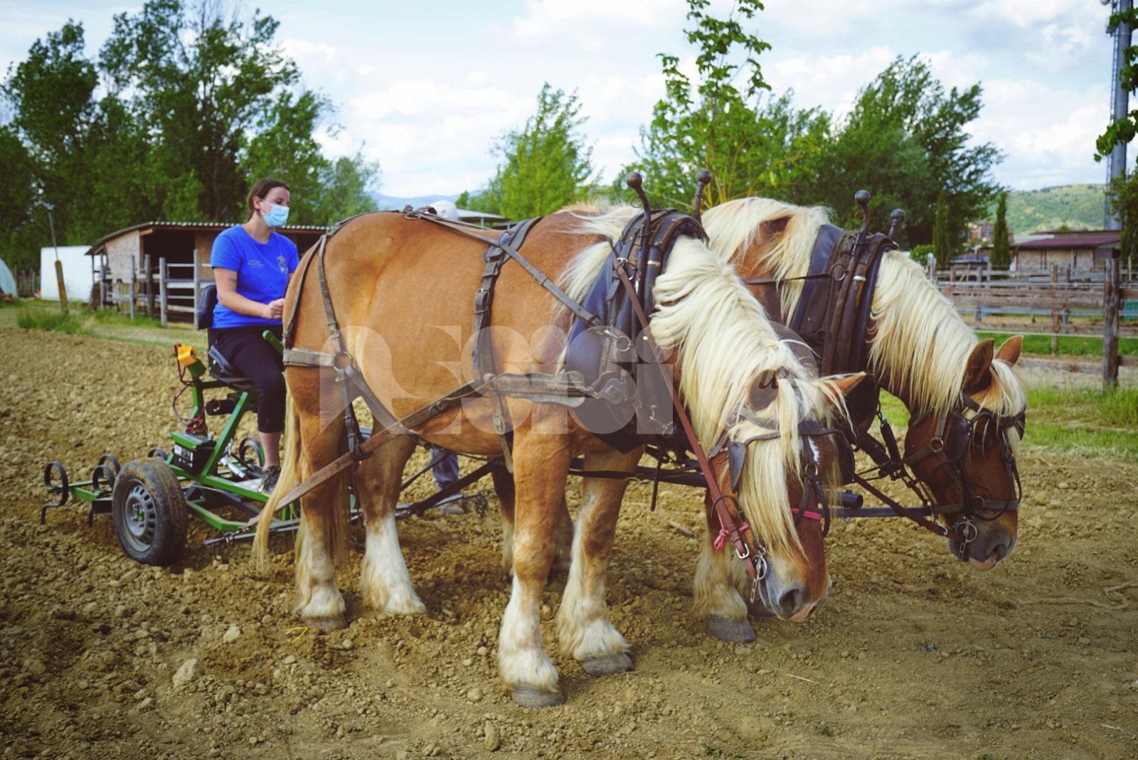 """Cavalli collaboratori, la replica di Eponalia: """"Il benessere degli animali ci sta a cuore"""""""