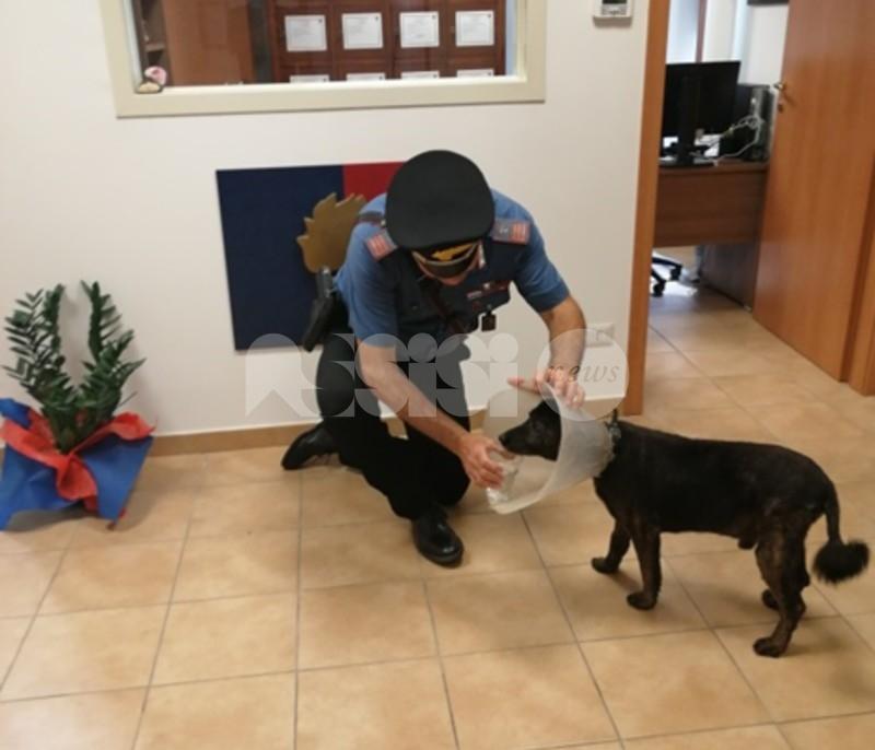 Scappa di casa dopo le cure, cane meticcio accudito e salvato dai carabinieri (foto)