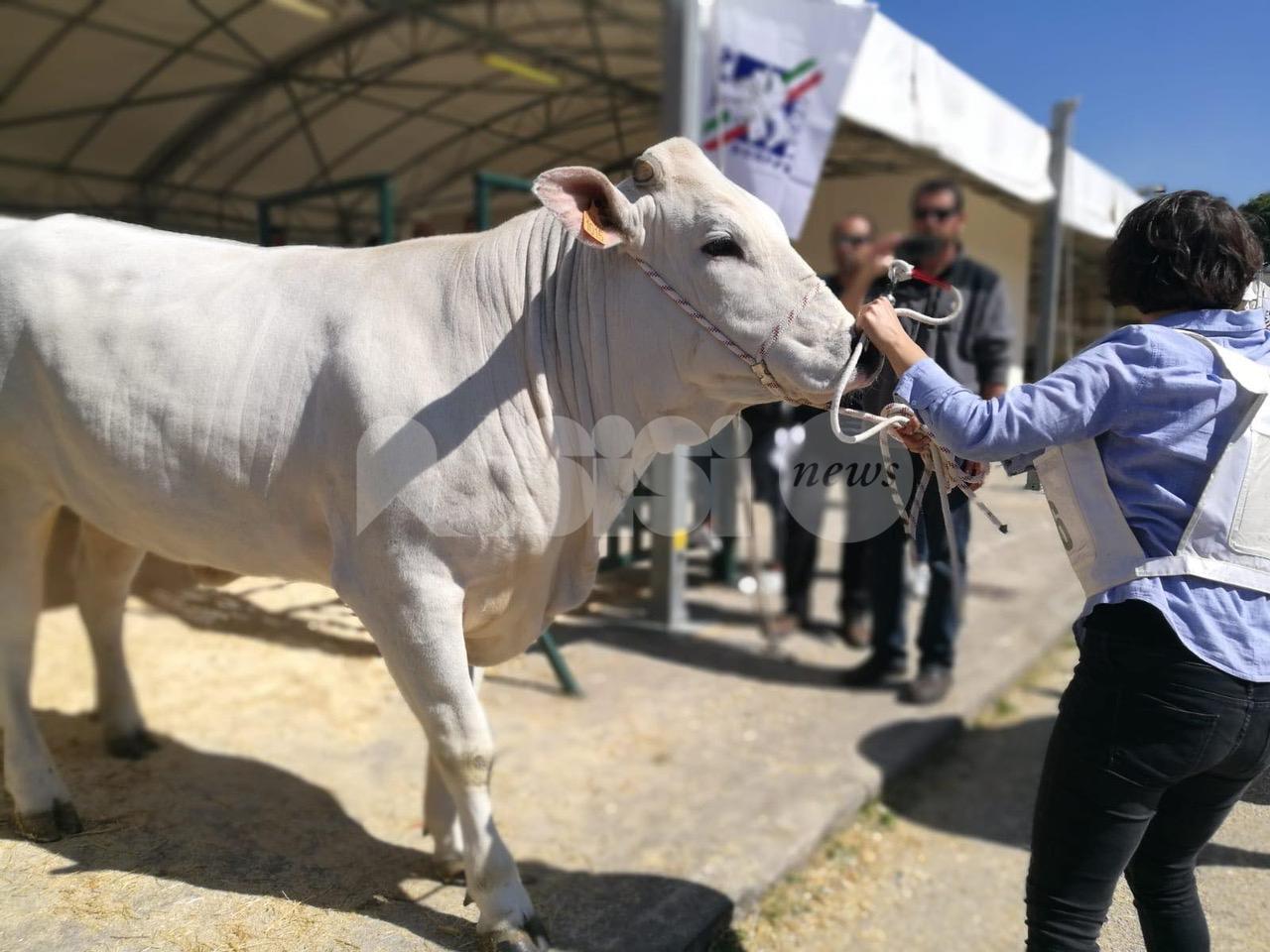 Agriumbria, prima fiera nazionale del settore agricolo in presenza in Italia
